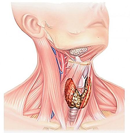 Эндокринная хирургия: прием и консультация хирурга эндокринолога в центре